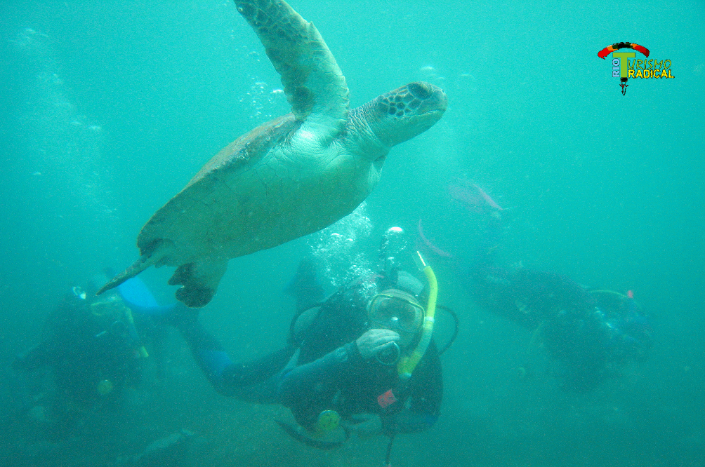 Green Turtle at Arraial do Cabo